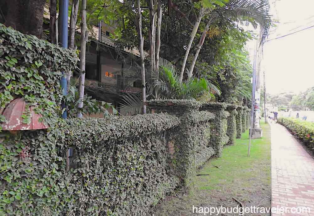 A boundary wall covered in creeper plant