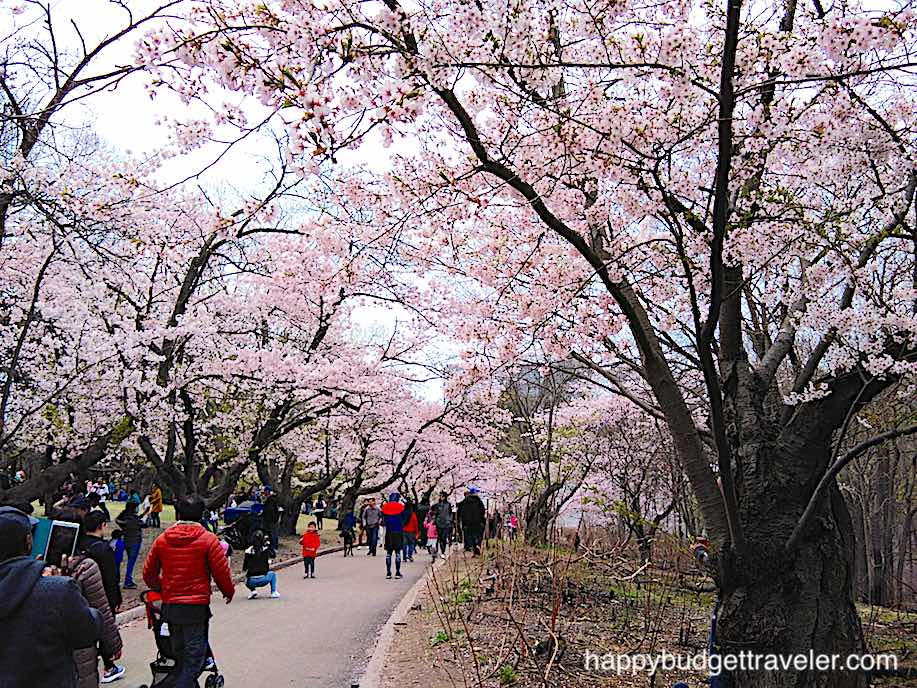 The Best Place To See Cherry Blossoms In Toronto High Park